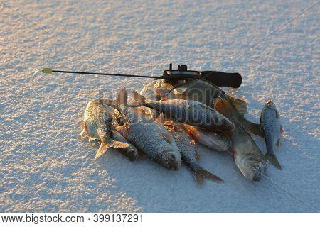 Winter Ice Fishing, Roach And Perch Fishing.