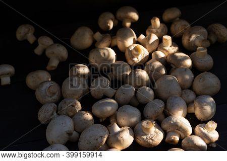 Edible Mushrooms On Black Background.edible Mushrooms On Black Background