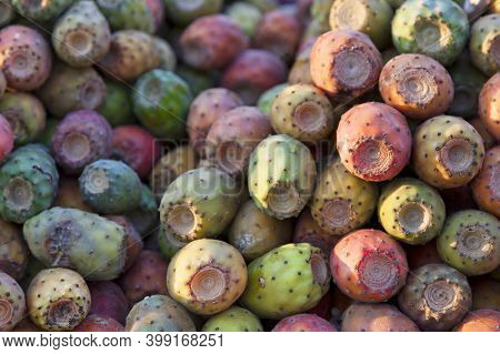 Opuntia, Commonly Called Prickly Pear, Is A Genus In The Cactus Family, Cactaceae. Prickly Pears Are