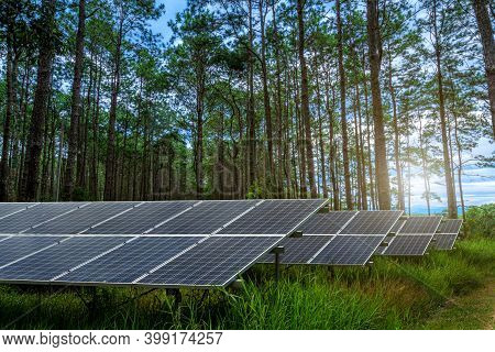 Photovoltaic Solar Power Panel  On Larch Forest Summer With Different Trees, Alternative Concept,cle