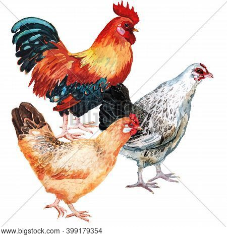 Watercolor Image Of Cock And Two Hens. Hand Drawn Realistic Illustration Isolated On White Backgroun