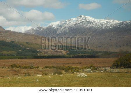Scotland. Rural Landscape.