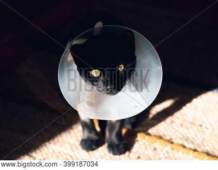 Close Up Of Black Cat With Funnel Cone Collar. Black Cat Portrait. Sick Cat With Funnel Cone Collar.