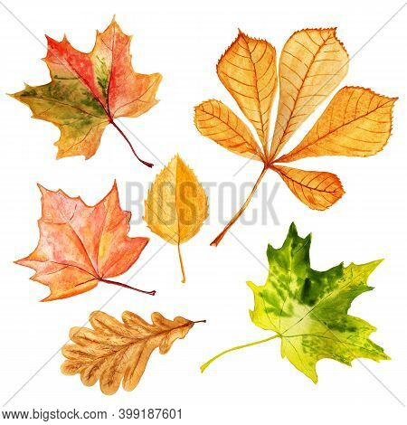 Set Of Watercolor Autumn Leaves. Hand Drawn Illustration Isolated On White Background.