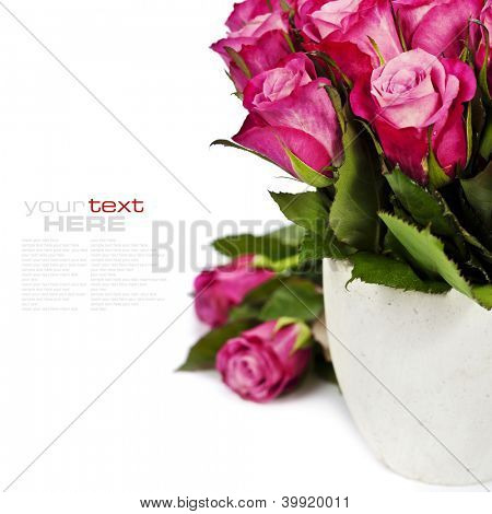 bouquet of pink roses in a pot on the white background (with easy removable sample text)