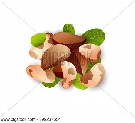 Brazil Nut Label. Brazillian Nut, Healthy Food