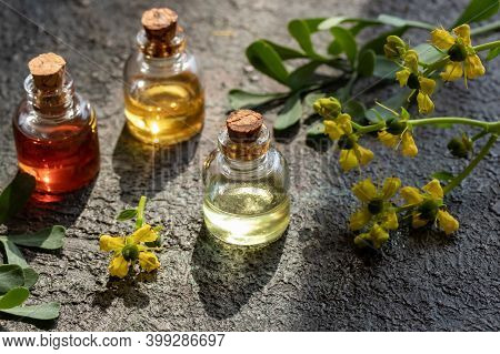 Bottles Of Essential Oil With Blooming Common Rue, Or Ruta Graveolens Twigs On A Dark Background