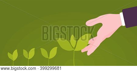 Green Sprouts Of Plant Putting Out Shoots With Helping Hand. Giving One Support To Encourage Sprouti