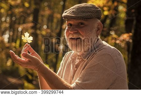 Curiosity To Botany. Explore World Around. Pensioner Hiking In Forest On Sunny Autumn Day. Man Enjoy