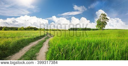 Summer Field And Dirt Road
