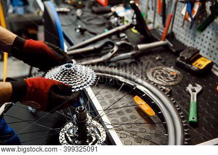 Bicycle repair in workshop, man installs cassette