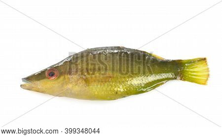 Pointed-snout Wrasse In Front Of White Background