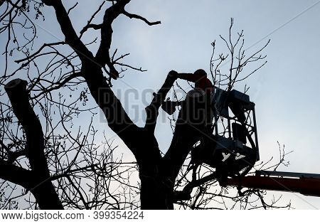 Tree Climber On A Crane Platform In A Basket With A Railing. Cut Of An Old Dry Tree With A Chainsaw.