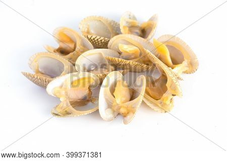 Top View Of Baby Clam Isolated ,short-necked Clam,carpet Clam Or  Venus Shell