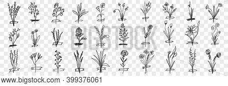 Blooming Plants Doodle Set. Collection Of Hand Drawn Blooming Plants With Buds And Flowers Growing O
