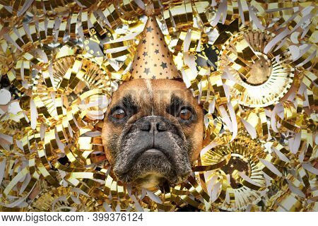 Silvester Party Dog. French Bulldog With Party Hat Sticking Out Head Between Shiny Golden Blowouts,