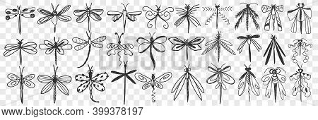 Dragonfly Doodle Set. Collection Of Hand Drawn Various Dragonfly With Elegant Wings With Different P