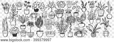 Plants In Pots Doodle Set. Collection Of Hand Drawn Homegrown Plants And Flowers In Pots For Decorat