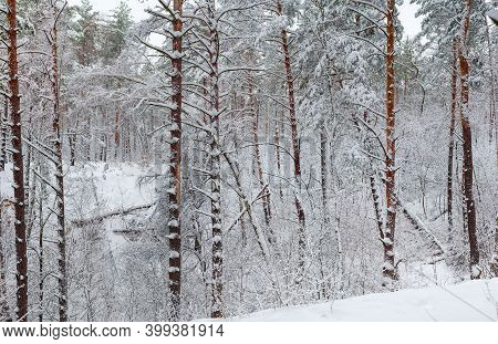 Section Of The Winter Forest With Coniferous And Deciduous Trees Covered With Newly-fallen Fluffy Sn