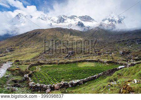 Salkantay Trek In The Way To Machu Picchu, Small Field Of Potatoes, Cuzco Area In Peru