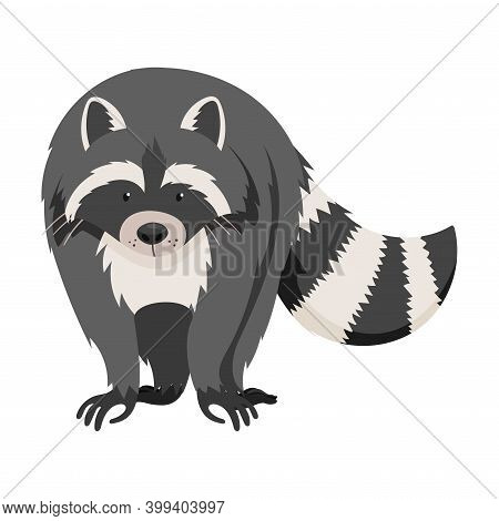 Curious Raccoon Animal With Dexterous Front Paws Walking Vector Illustration