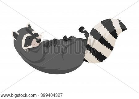 Curious Raccoon Animal Lying On Its Back With Paws Up Vector Illustration