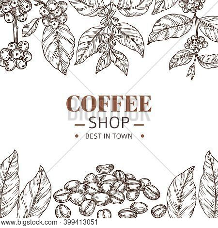 Coffee Shop Poster. Drawing Leaves, Hand Drawn Beans Or Roasted Arabica Grains. Cafe Branding, Vinta