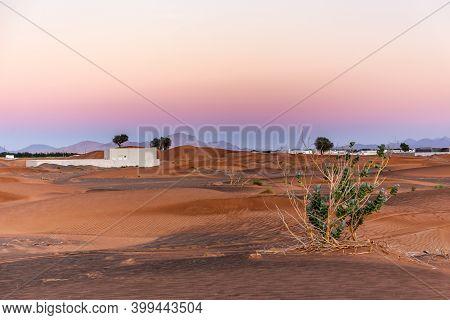 Desert Landscape With Sand Dunes, Pink Sunset Sky And Purple Crown Flower Plant (calotropis Procera)