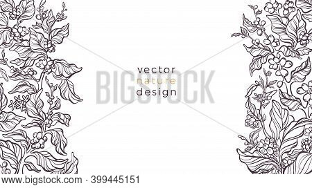 Vector Nature Border. Coffee Plant, Leaves, Bean, Grain, Branch On White Background. Aroma Arabica D