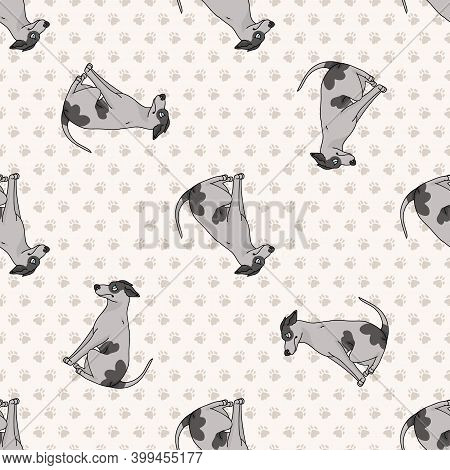 Cute Cartoon Greyhound Sitting Vector Clipart. Pedigree Kennel Dog Breed For Obedience Training. Pur