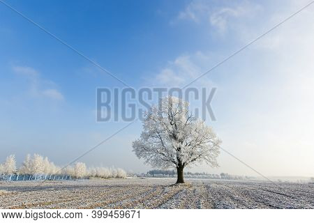 Frozen Trees On Winter Road And Blue Sky In A Sunny Day