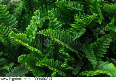 Beautiful Tropical Nature Background With Rainforest Jungle Plants Pattern. Green Fresh Fern Leaves