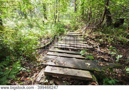 Empty Abandoned Footbridge Goes Through Dark Forest, Travel Background Photo