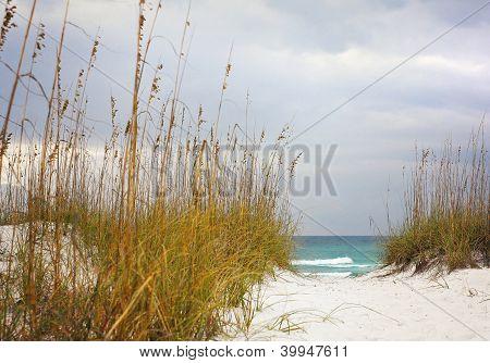Sandy camino a playa hermosa