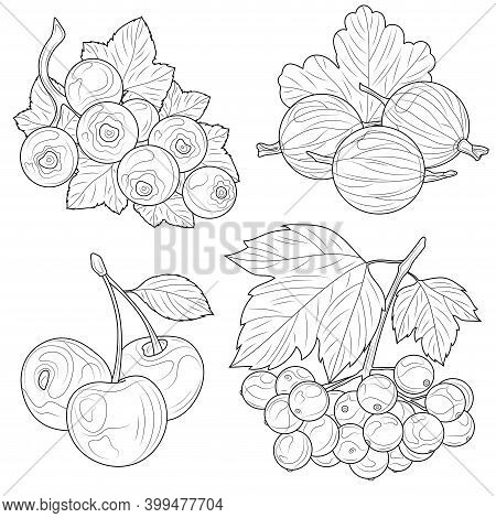 Berries. Viburnum, Gooseberry, Cherry And Currant.coloring Book Antistress For Children And Adults.z
