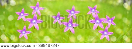 Unfocused Summer Floral Wide Banner With Bluebells Blooming In The Grass