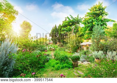 English Cottage Garden On Green Grass Lawn Backyard, Infomal Landscape Decorate With Roses, Flower P