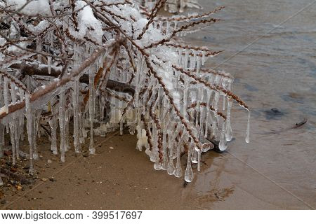 Winter Coast With Snow And Branches In Ice Icicles - Photo Of Branches In Ice Icicles