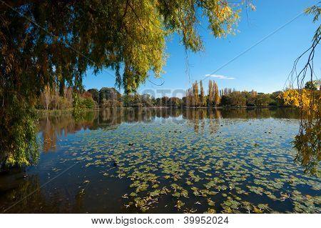 Canberra Pond, Australia