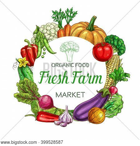 Farm Vegetables Vector Round Frame Eggplant, Bell Pepper And Cauliflower With Beetroot. Cucumber, Gr