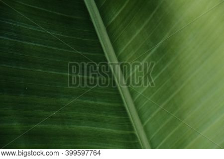 The Leaf Texture Makes A Nice Natural Groove