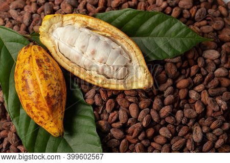 Ripe Cocoa Pod And Nibs, Cocoa Beans Set Up The Background.