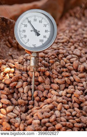 Cocoa Fermentation Temperature, The Cocoa Bean Fermentation Process, Temperature Measurement Of Coco