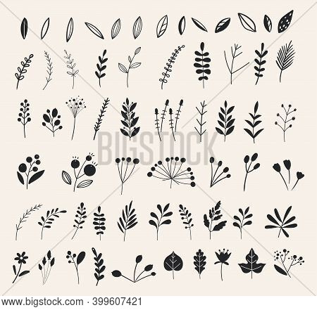 Hand Drawn Flowers And Floral Branches And Berries, Florals. Vector Branches And Leaves. Hand Drawn