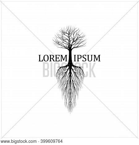 Abstract Dry Dead Oak Maple Banyan Cedar Tree Silhouette Illustration Logo Design