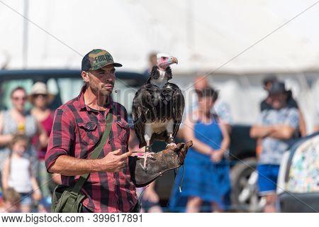 Blandford Forum.dorset.united Kingdom.august 24th 2019.a Hooded Vulture (necrosyrtes Monachus) Is Pe