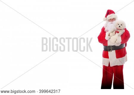 Santa Claus holds a Bichon Frise Dog. Santa Holds his Pure Breed Bichon Frise Dog for a Photo. Isolated on white. Room for text. Merry Christmas.