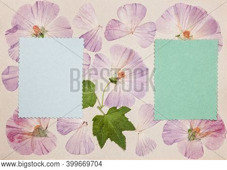 Page From An Old Photo Album. Flowers Lavatera. Scrapbooking Element Decorated With Leaves, Flowers
