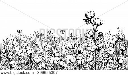 Cotton Plant On The Field. Leaves And Flowers. Plant. For Fabrics, Textiles, Labels, Covers And Temp