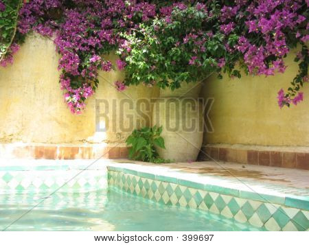 Tiled Pool With Purple Bouganvillea